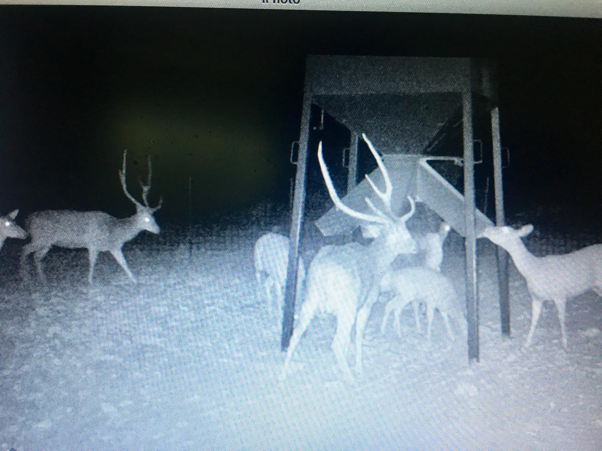 Baker 3 ranch night vision camera shot of axis deer