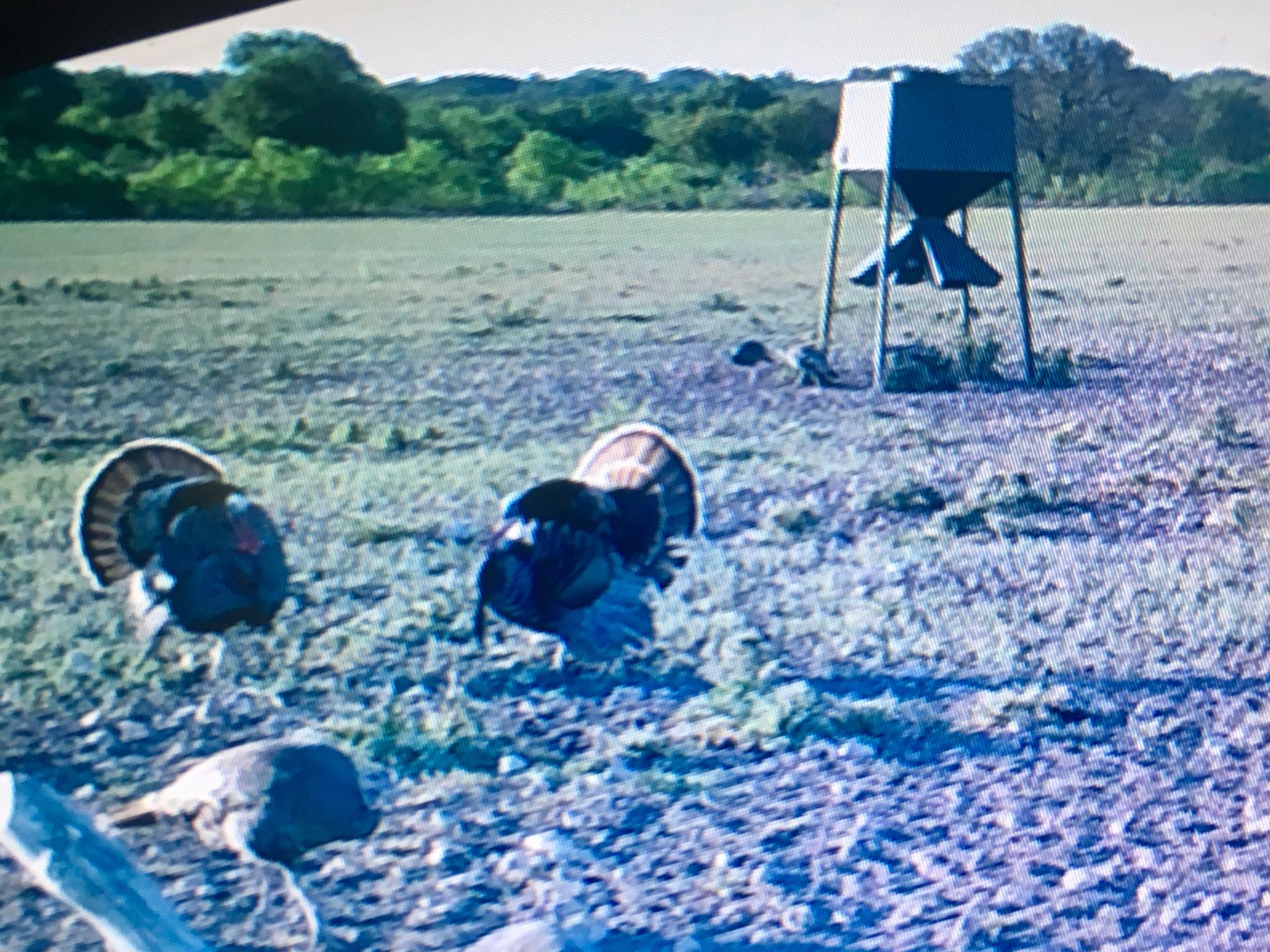 Baker 3 ranch camera shot of turkeys